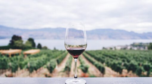 wijngaarden nederland - wijngaard nederland - wijngaarden europa - wijngaard bezoeken - hoe wordt wijn gemaakt - wijngaard - wijngaarden