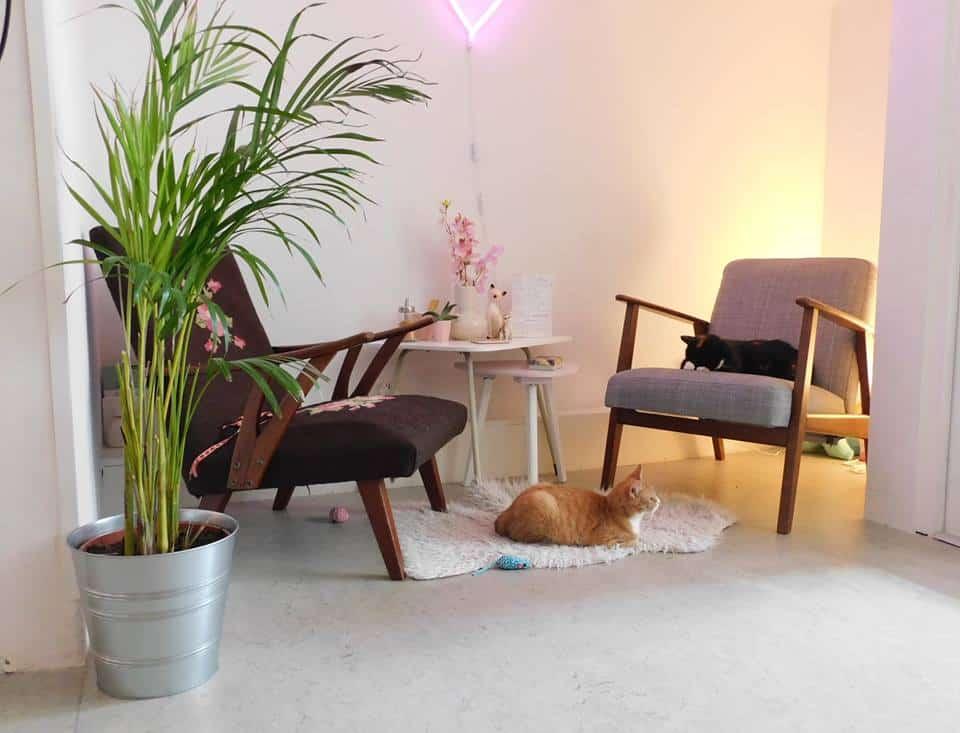 Bron: Kattencafé Poeslief. Kattencafés Nederland / kattencafe groningen