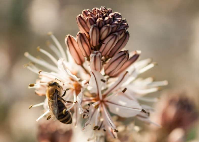 Sommige mensen houden niet van bijen. Ze denken dat ze ons lastigvallen terwijl we in het park aan het barbecuen zijn of op het strand liggen. Maar het feit is, deze kleine insecten zijn verantwoordelijk voor ons bestaan. En het slechte (zacht uitgedrukt) nieuws is, die sterven uit. Dit is belangrijk om te weten, want bijen zijn voor 90% verantwoordelijk voor het voeden van de wereldbevolking. En in feite zouden we dus niet zonder hen kunnen overleven.