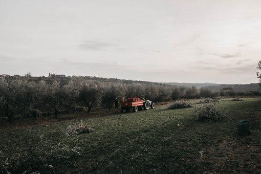 Slovenië het land van kaki, olijven, pompoen olie, truffels, wijn en grappa. Allemaal producten die met de hand worden gemaakt of geplukt. De lokale bewoners hebben er veel werk aan maar jij kan ze mee helpen!