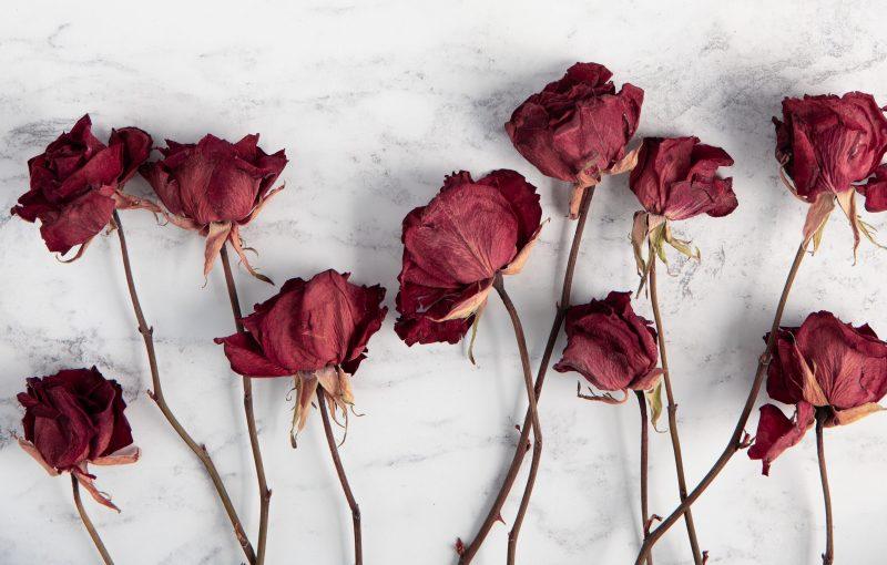 gedroogde bloemen - bloemen drogen - gedroogde bloemen in lijstje - bloemen in lijstje - DIY