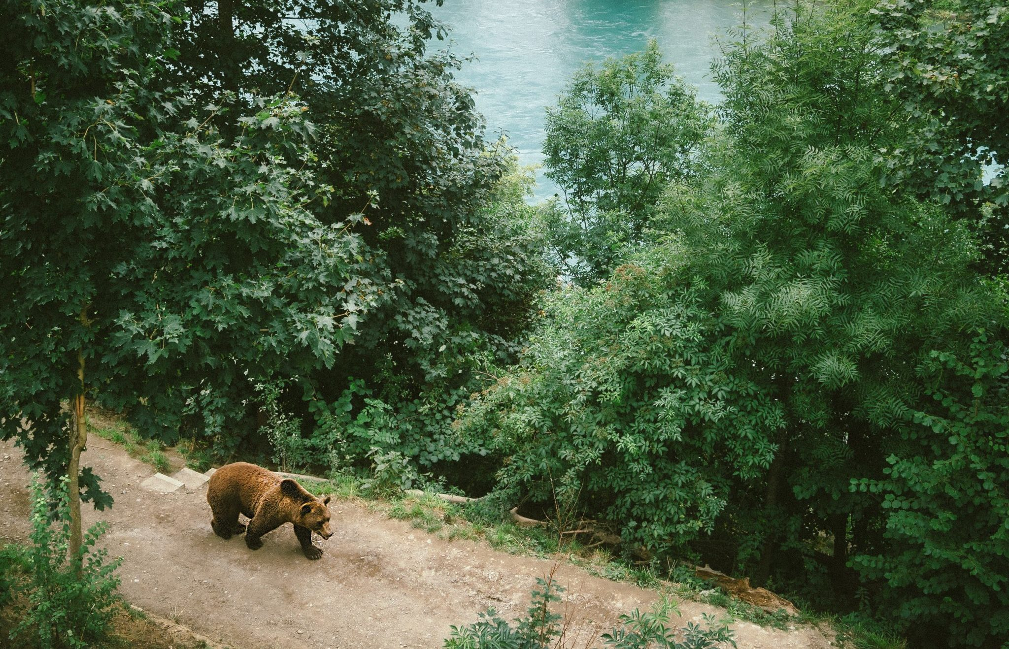 droom betekenis dieren - betekenis van jouw droom - betekenissen dromen - betekenis droom beer - droom betekenis beer