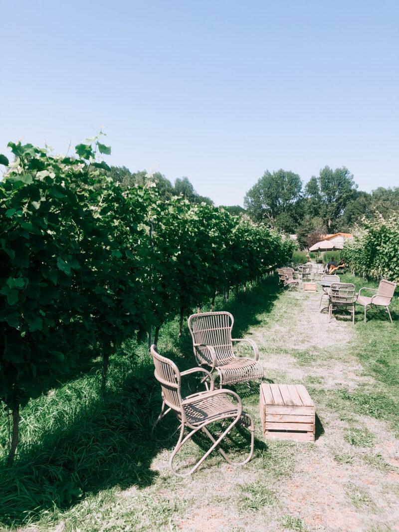 Terrasjesdagen Wijngaard de Amsteltuin - wijngaard amstelveen - wijngaard nederland - wijn uit nederland