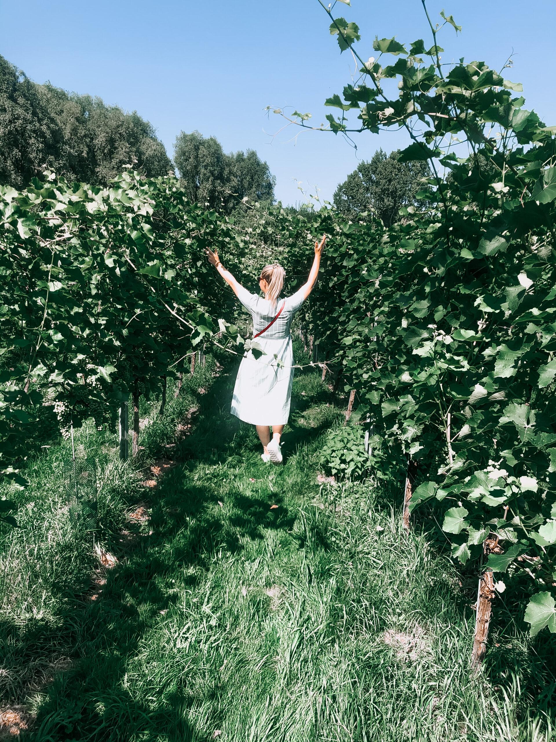 Kiki Bosman - Wijngaard Amsteltuin - Wijngaard amstelveen - wijnen uit nederland