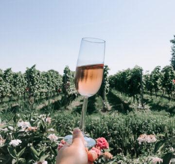 wijngaard de amsteltuin - wijngaard amstelveen - nederlandse wijnen