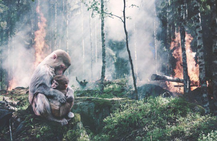 bosbranden australis - bosbranden - australia bosbrand - doneren australis - doneren bosbranden