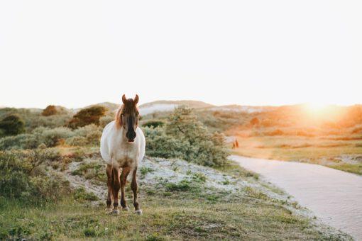 wandeling nederland - boswandeling maken - mooie bossen nederland - wandeling zuid limburg - paard - Zuid-Kennemerland