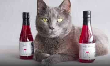 catewine - wijn voor katten - pursecco - snacks voor kat - kattennamen - originele kattennamen