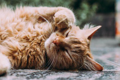 films - filmtips - tips - kattenliefhebbers