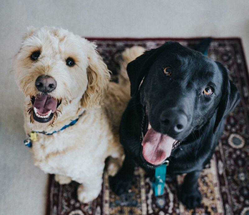 dierenliefhebbers - gratis op vakantie - dieren - huisdieren - trustedhousesitters - housesitting - goedkope vakantie
