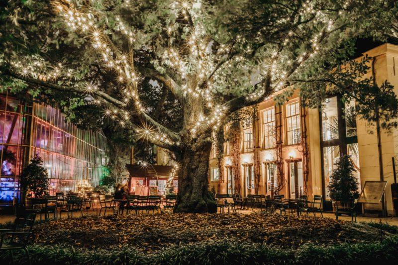 hortus by night - hortus botanicus - winter date amsterdam - wat te doen in amsterdam december - winter event