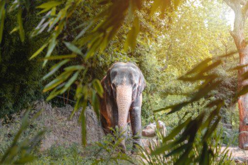 natuur livestreams - wilde dieren - dieren livestreams - livestream natuur - dieren video's - webcam dieren - natuur webcam