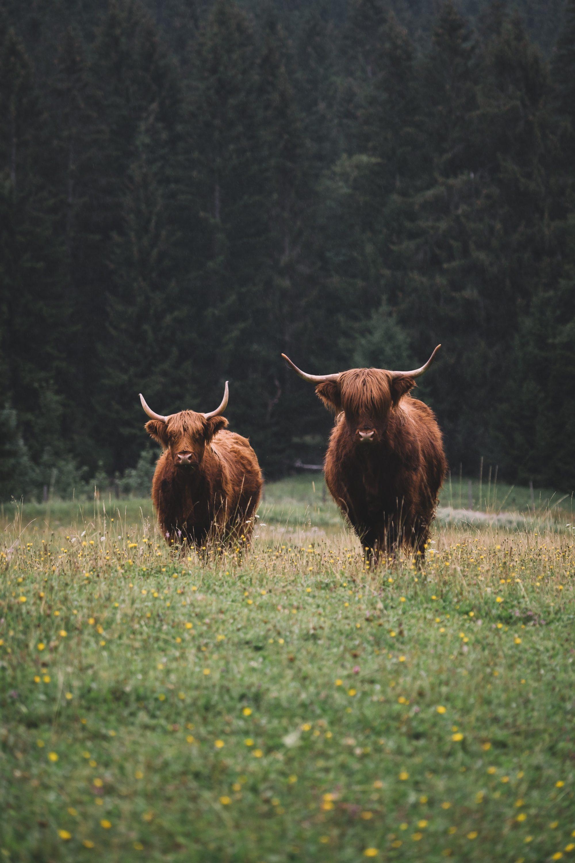 nationale parken - nationale parken nederland - parken nederland - mooiste parken - wandelen - vakantie in eigen land - vakantie nederland - wandeling - natuurgebieden nederland