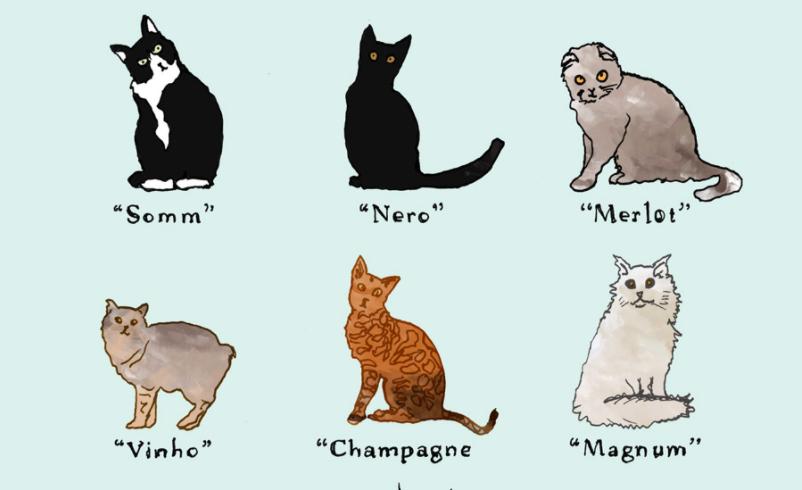 leuke kattennamen - originele kattennamen - wijnnamen - grappige kattennamen - stoere kattennamen - aparte kattennamen