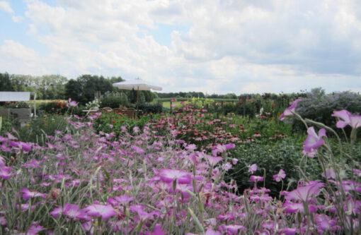 pluktuinen - pluktuin - pluktuinen nederland - fruittuin - fruittuinen - groentetuin - fruit plukken - bloemen plukken