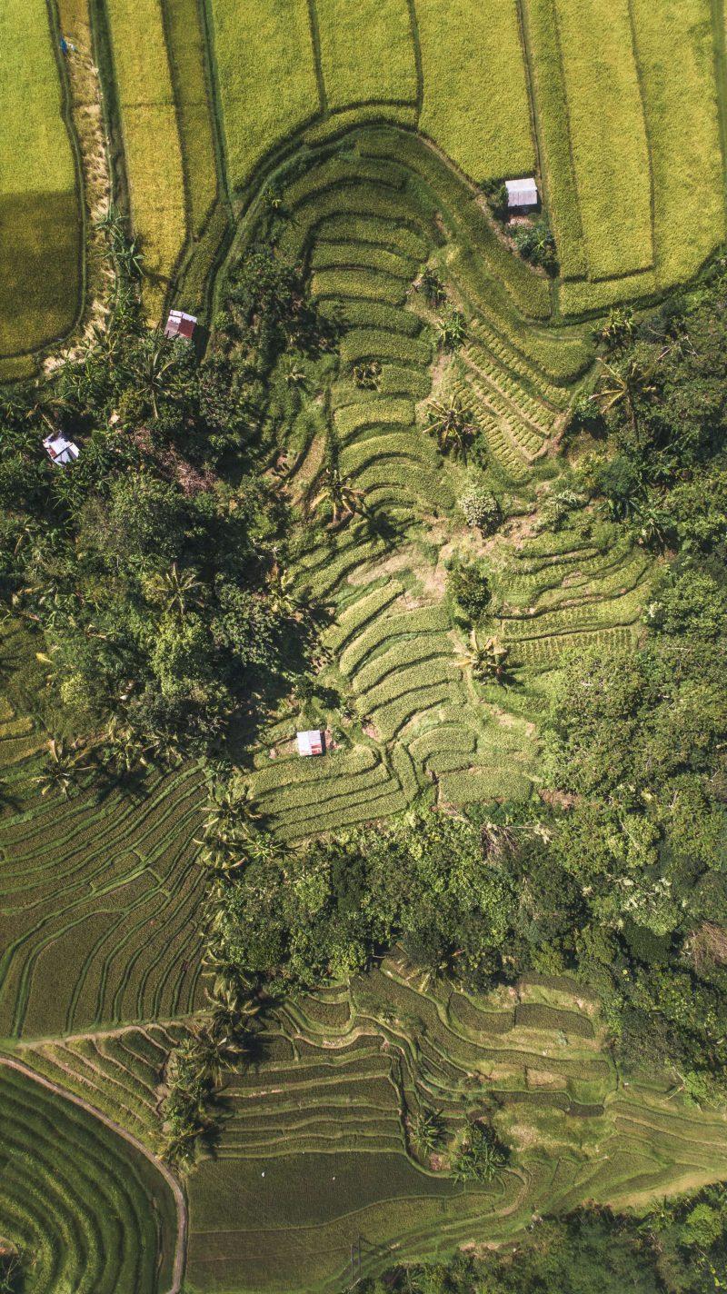 sapa vietnam - rijstvelden vietnam - rondreis vietnam