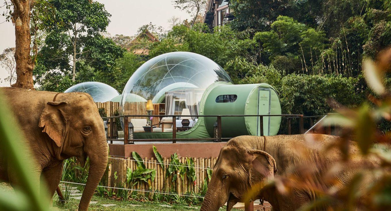 slapen met olifanten - slapen tussen de olifanten - anantara thailans