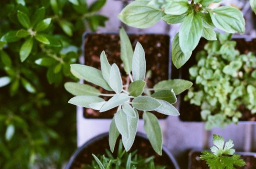 thuis tuin - kruidentuin - kruiden kweken