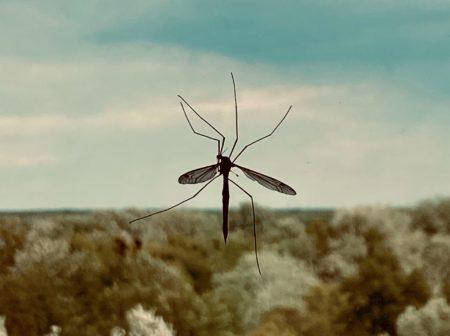 wat te doen tegen muggen in huis - muggen verjagen oma tips - muggen bestrijden spray - citroen tegen muggen -