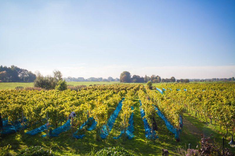 nederlandse wijnen - wijnen uit nederland - nederlandse wijn - wijn uit nederland - wijn kopen - nieuwe wijn proberen - wijnen kopen - wijnen supermarkt